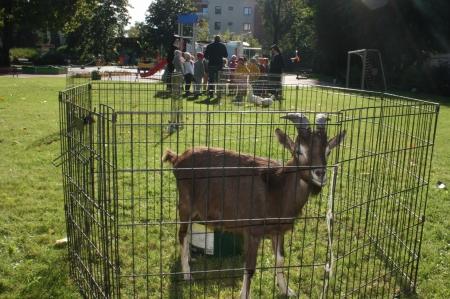 Warsztaty przyrodnicze – zwierzęta gospodarskie